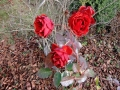 Rosen im Dezamber